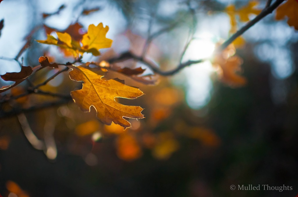 Autumn leaves-1-4