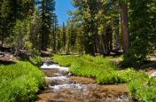 A happy mountain creek and meadow
